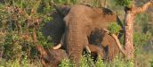 Only the Best - Tours in South Africa